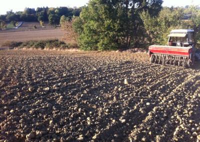 la semina del grano
