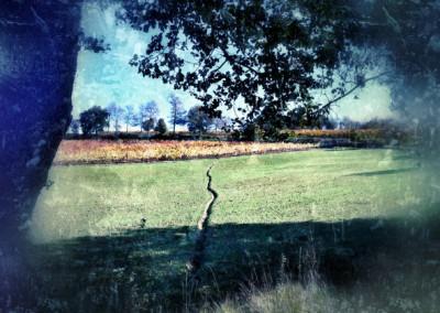 veduta tra le querce