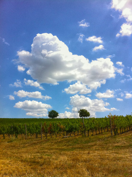 vigne_nuvole